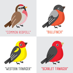 Different type of birds collection isolated on white background : Vector Illustration
