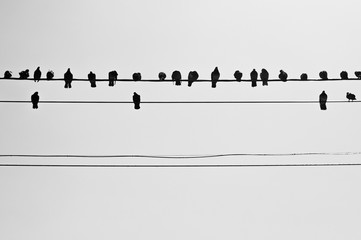 Photo sur cadre textile Oiseau birds are sitting on wires