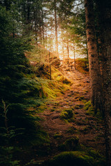 Wall Murals Forest Tranquil scenery in a autumn forest, with the sun casting enchanting rays of light through the trees