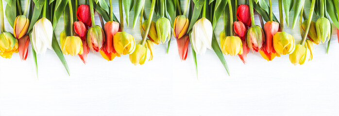Foto op Plexiglas Tulp Beautiful celebration background. Bunch of multicolored tulips withe waterdrops on a white background. Copy space, flat lay