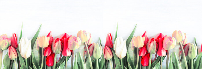Beautiful celebration background. Bunch of multicolored tulips withe waterdrops on a white...