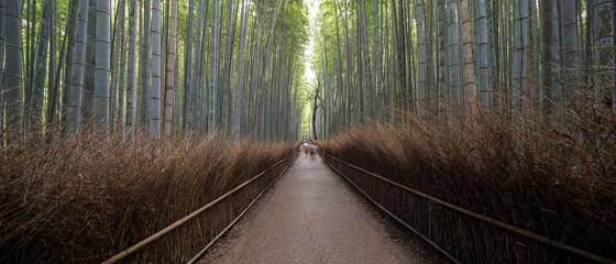 Deurstickers Bamboo Bamboo Forest, or Arashiyama Bamboo Grove or Sagano Bamboo Forest, is a natural forest of bamboo in Arashiyama, Kyoto, Japan.