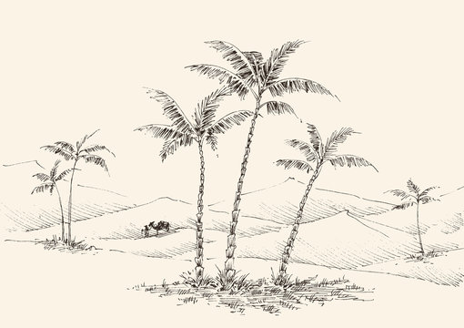 Oasis in the desert hand drawing, palm trees, fountain water and a camel in the background