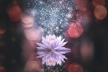 Garden Poster Lotus flower Abstract background with lotus flower