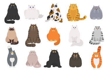 Cat poster. Cartoon cat characters collection. Different cat`s poses and emotions set. Flat color simple style design