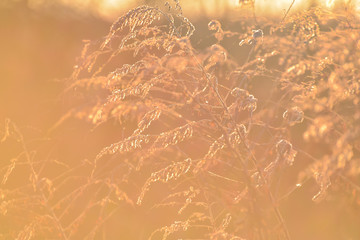 Wild plants in winter