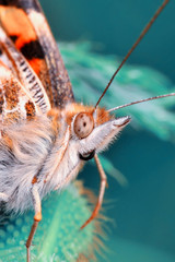 Papiers peints Papillon Closeup beautiful butterfly sitting on the flower.
