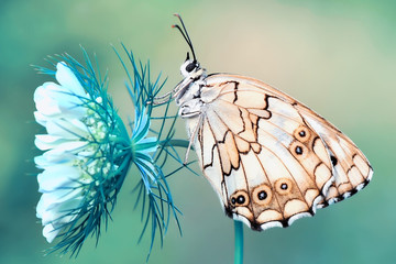Foto op Aluminium Vlinder Closeup beautiful butterfly sitting on the flower.