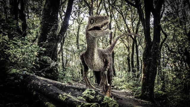 Velociraptor Dinosaur  in the  Rainforest