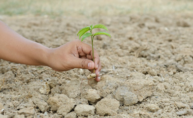 young plant in hand and dry soil
