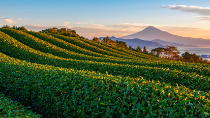 In de dag Cultuur Sunrise over Mt. Fuji / Fuji Mountain and fresh green tea field at Nihondaira, Shizuoka, Japan