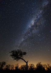 The Milky Way photographed over trees on the South African savanna.