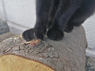 Foto op Aluminium Panter beautiful paw of a black cat with claws released on a stump bitch outdoors outdoors