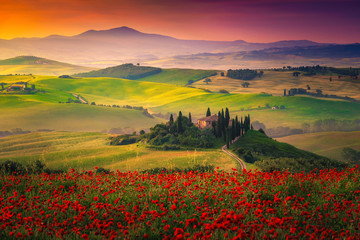Zelfklevend Fotobehang Toscane Stunning red poppies blossom on meadows in Tuscany, Pienza, Italy
