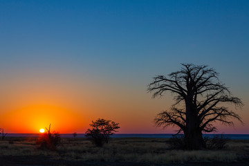 Sunrise at kukonje Island at large baobab tree