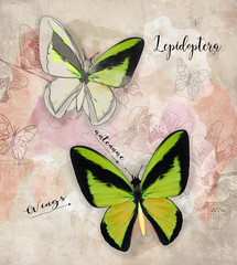 Vintage backdrop with green butterflies, flowers and stains - digital painting illustration