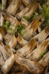 Dry bark of palm tree