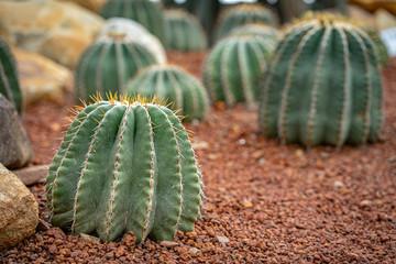 Photo sur Aluminium Cactus Beautiful collection of cactus in garden.