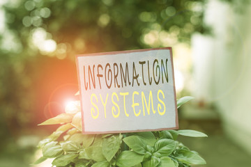 Conceptual hand writing showing Information Systems. Concept meaning study of systems with a exact reference to information Plain paper attached to stick and placed in the grassy land Wall mural