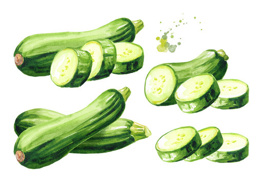 Green whole and cut zucchini vegetable set. Hand drawn watercolor illustration, isolated on white background