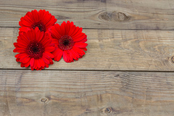 Acrylic Prints Gerbera red gerbera flowers on wooden background