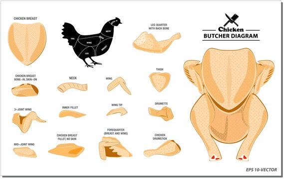 chicken butcher diagram or part of hen butcher concept. easy to modify