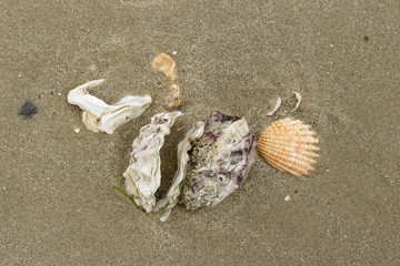 Shells of mollusc on the sandy beach