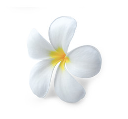 Autocollant pour porte Frangipanni Plumeria isolated on white background