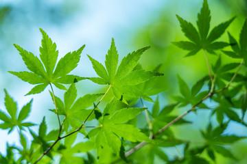 新緑・ecoイメージ