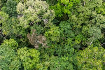 Floresta Amazônica, Arvores na reserva florestal, uma floresta primária na zona leste da cidade de Manaus, Estado do Amazonas, Brasil.. Dezembro/2019