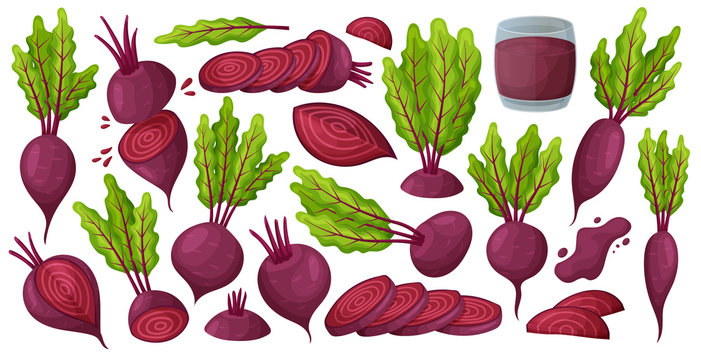 Vegetable of beet vector cartoon set icon. Vector illustration beetroot root on white background .Isolated cartoon set icon food of beet.