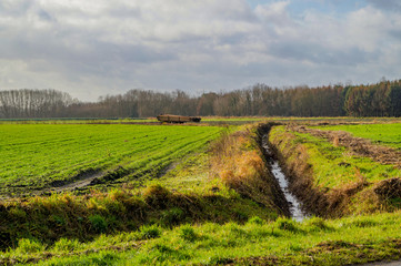 Foto op Canvas Donkergrijs rural landscape with green field and blue sky in winter