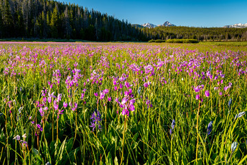Idaho Sawtooth Mountains with a meadow filled with wild flowers Fotomurales
