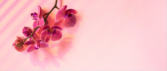 Tuinposter Orchidee Pink banner with blooming orchid and sunlight