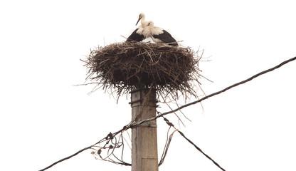 stork bird nest on pole isolated on white