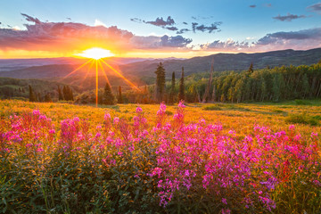 Spoed Fotobehang Landschap Wildflower sunset in the Colorado Rockies, USA.
