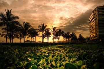 Coconut palms in sunset on the beach - Riviera, Sao Paulo - Brazil
