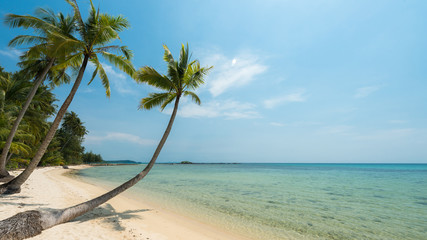 Wall Mural - Beautiful coconut trees palm at the sand beach for relaxation, Located Koh Kood Island, Thailand