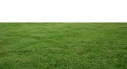 Spoed Foto op Canvas Gras fresh green grass lawn isolated on white background