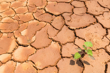 drought land and little green plant