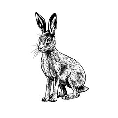 Hand drawn hare. Vector black white sketch.