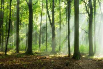 Fototapeten Pistazie Beautiful morning in the forest