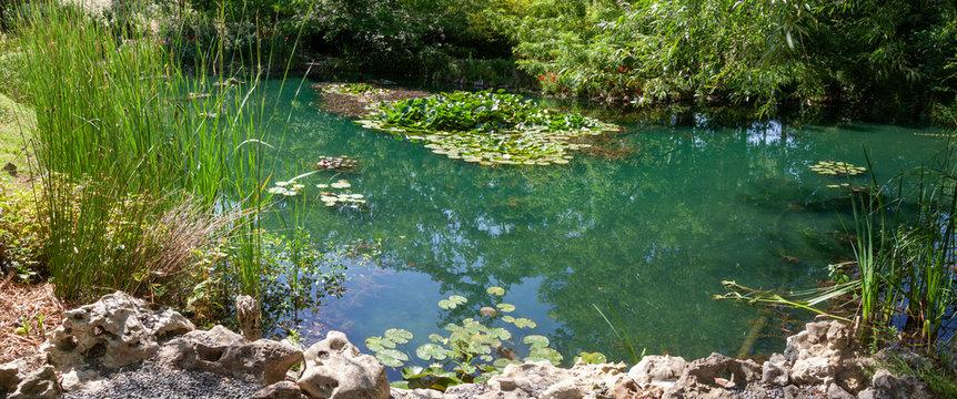 Jardin - mare entouré de plantes aquatiques