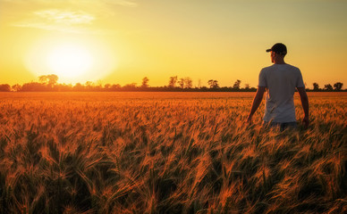 Male farmer standing in a wheat field during sunset. Man Enjoys Nature Wall mural