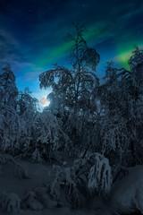 Alberi congelati e luna sorgente