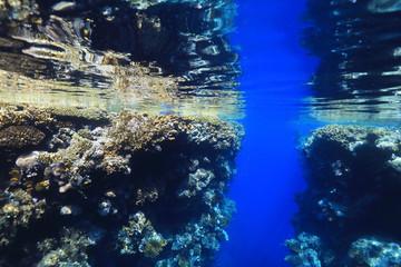 Wall Mural - Underwater coral reef