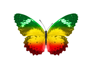 Foto auf AluDibond Schmetterlinge im Grunge butterfly isolated on a white background. with wings of yellow, green, red. Rasta color.