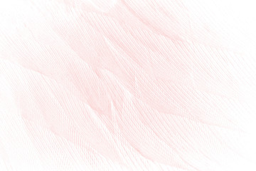Beautiful line soft pink feather pattern texture background