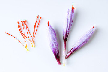 Fresh saffron flower and dried saffron threads on a white background.