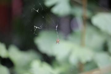 Pajęcza sieć z pająkiem - fototapety na wymiar